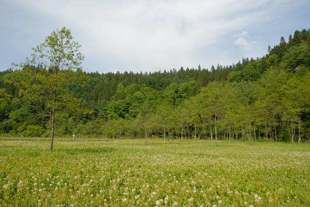 20060604_2.jpg